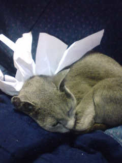 お気楽ネコ